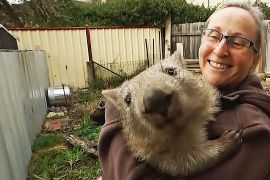 1000 звірів за рік урятувала австралійська організація