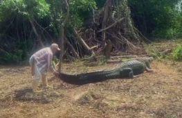 Потягати за хвіст: як болівійський гід дружить із диким крокодилом