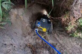 Робот досліджуватиме нори, щоб урятувати вомбатів від кліщів