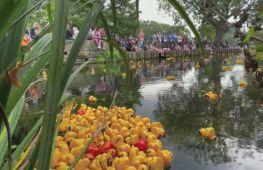 Заплив пластикових качок в англійському місті Кентербері