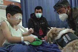 Кошлатий десант: собаки-терапевти допомагають лікарям і пацієнтам у Чилі