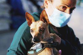 Собаки, коти й кури: тимчасовий притулок на острові Пальма рятує тварин