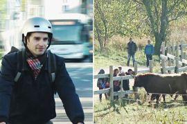 Корови, комахи й велосипедисти: як Таллінн став зеленою столицею